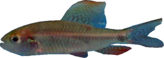 Bienvenido expobusiness for Reproduccion de peces ornamentales